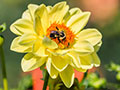 Dahlia Hill Photo Gallery