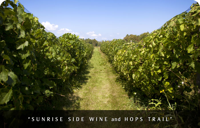 Sunrise Coast Wine & Hops Trail